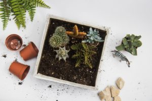 Succulent-Plant-Workshop-Brainy-Actz